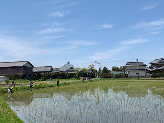 むかしの田んぼ体験会 (2019年7月)