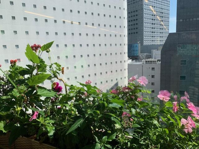 社内の植物たち